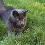 cat-1296998_1280